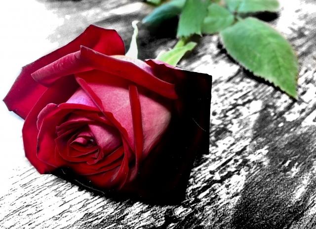 色褪せた赤いバラ
