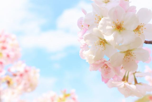空と桜の花